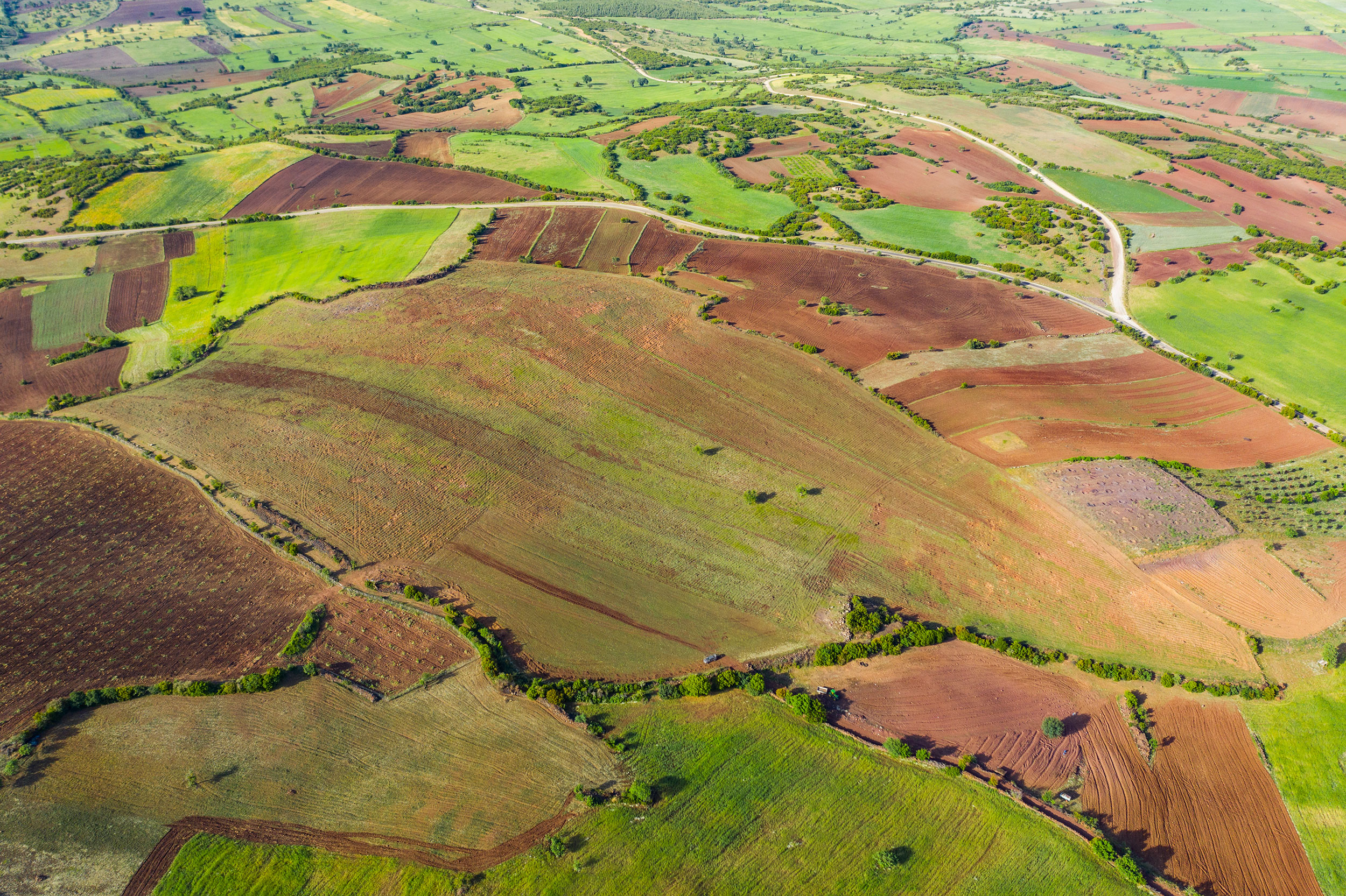 Why Agroforestry is so important for the future of farmlands?