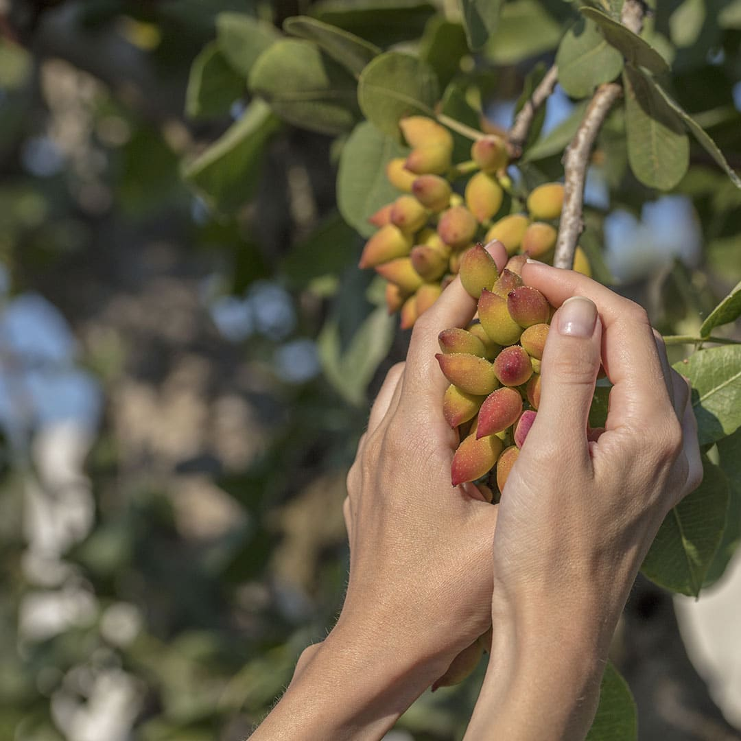 Why Invest in Managed Almond Farmlands?