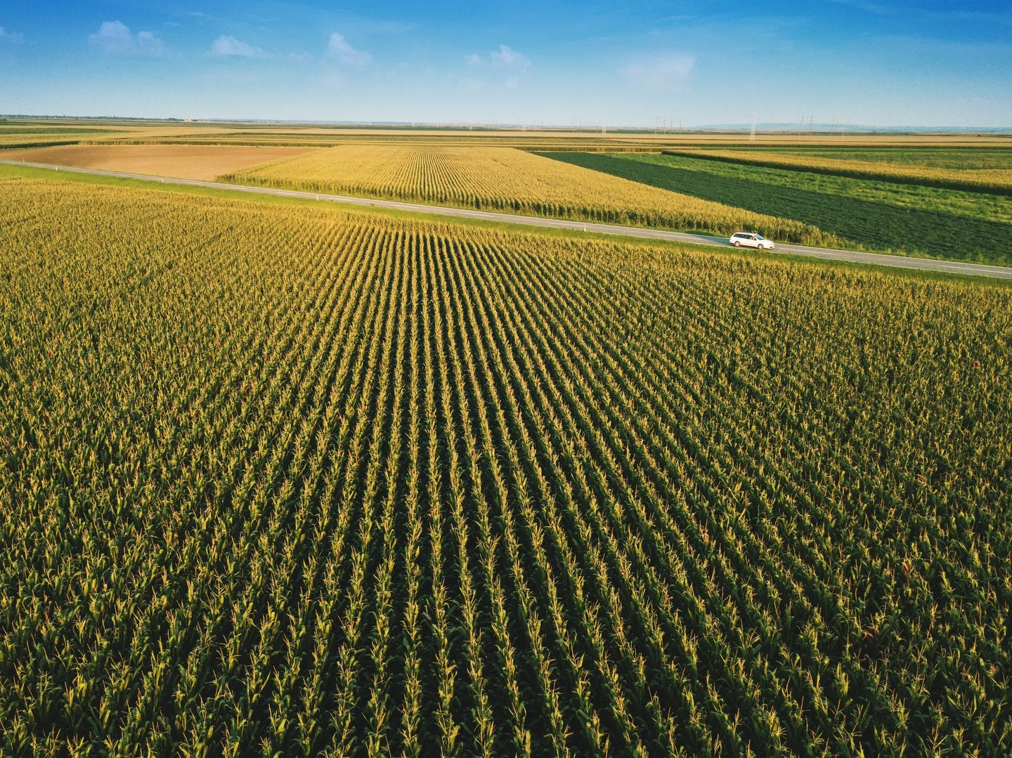Investing in managed farmland: Why it is one of the best option during the 2020 economic crisis