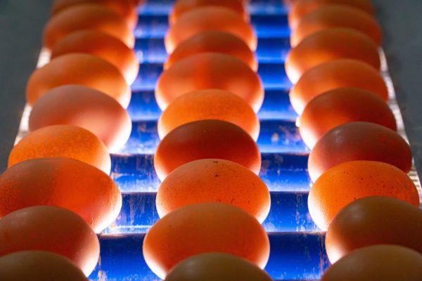 invest4land-free-range-eggs-01