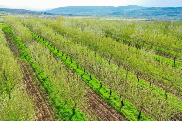 Agri Agriculture Farmlands Investment Almond Investor Farmer 2