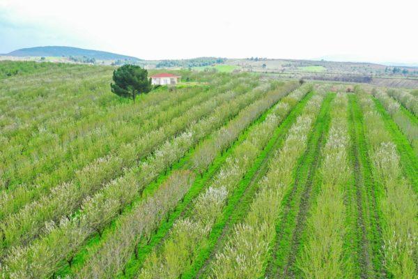 Agri Agriculture Farmlands Investment Almond Investor Farmer 3