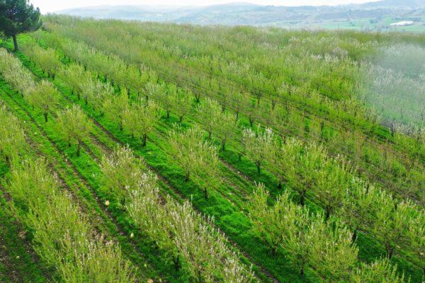 Agri Agriculture Farmlands Investment Almond Investor Farmer 4