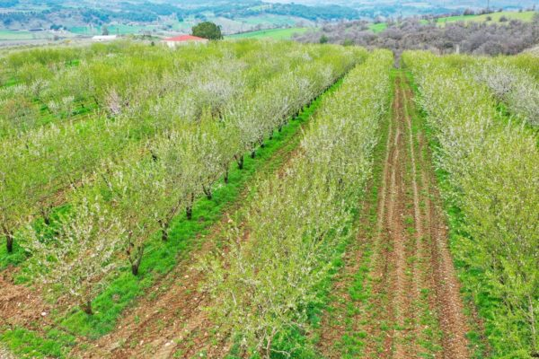 Agri Agriculture Farmlands Investment Almond Investor Farmer 5
