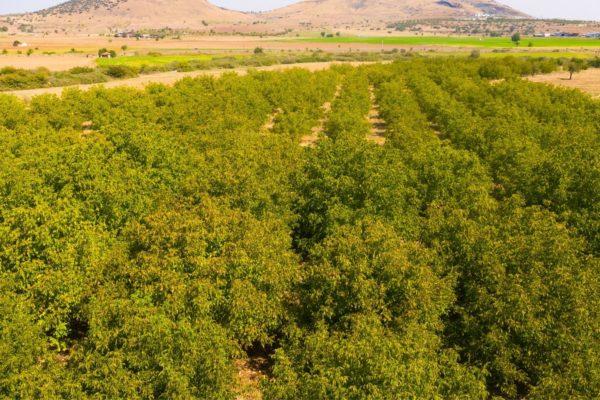 Agri Agriculture Farmlands Investment Walnut Investor Farmer 1