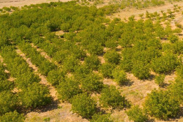 Agri Agriculture Farmlands Investment Walnut Investor Farmer 3