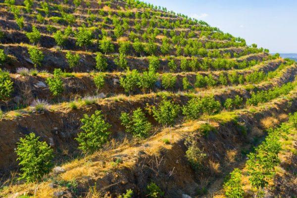 Agri Agriculture Farmlands Investment Walnut Investor Farmer 4