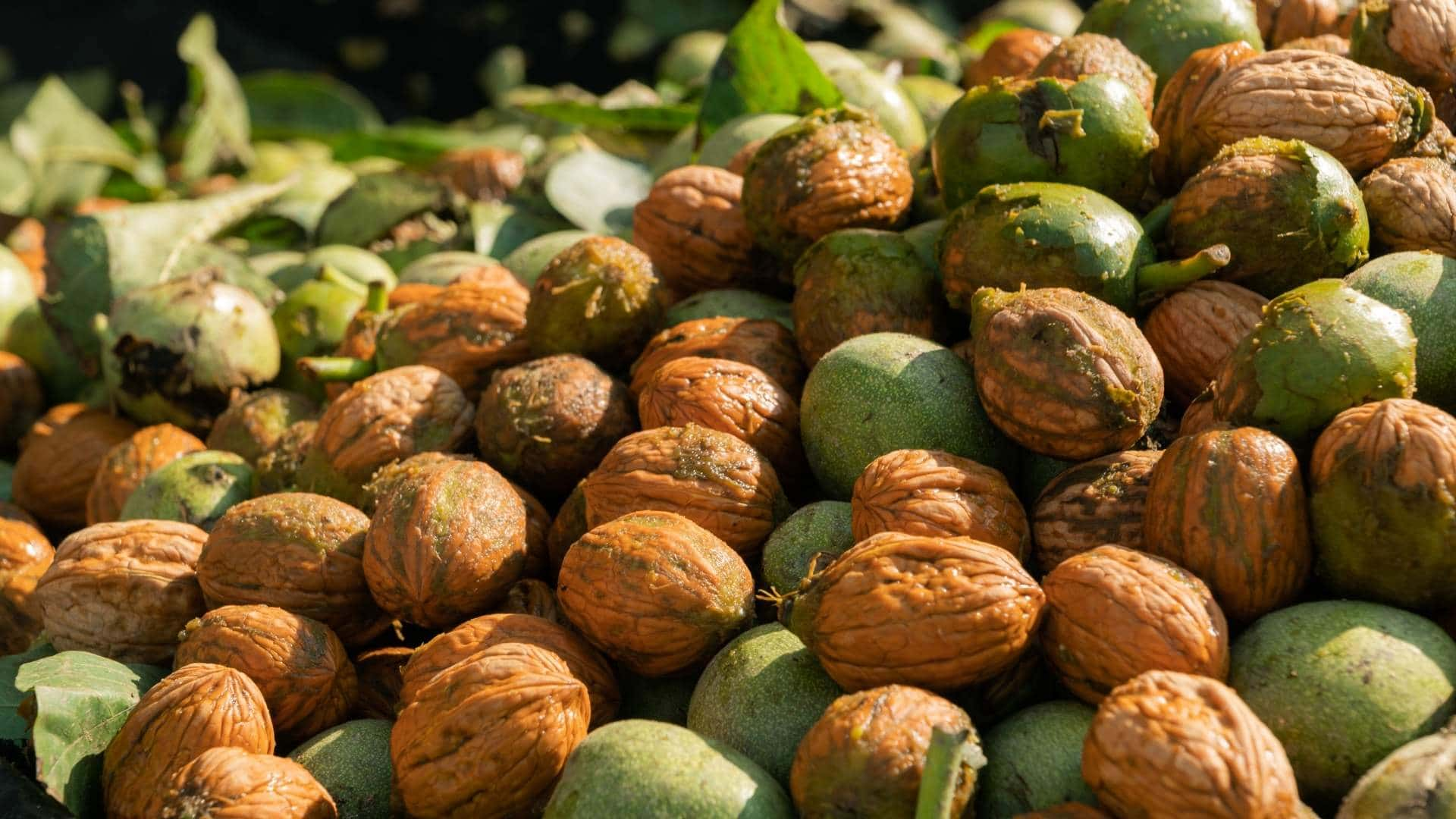 New Great: Walnut Market