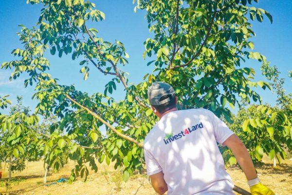 Invest4Land Agriculture Real Estate Investment Farmland Walnut Almond Agrobusiness Harvest Farmer0