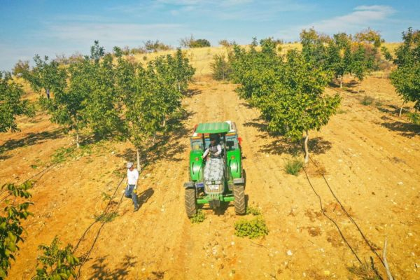 Invest4Land Agriculture Real Estate Investment Farmland Walnut Almond Agrobusiness Harvest Farmer2