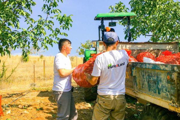 Invest4Land Agriculture Real Estate Investment Farmland Walnut Almond Agrobusiness Harvest Farmer3