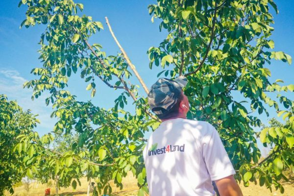 Invest4Land Agriculture Real Estate Investment Farmland Walnut Almond Agrobusiness Harvest Farmer4